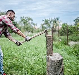 Bûcheron pour abattage d'arbres